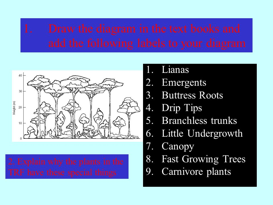 1.Draw the diagram in the text books and add the following labels to your diagram 1.Lianas 2.Emergents 3.Buttress Roots 4.Drip Tips 5.Branchless trunks 6.Little Undergrowth 7.Canopy 8.Fast Growing Trees 9.Carnivore plants 2.