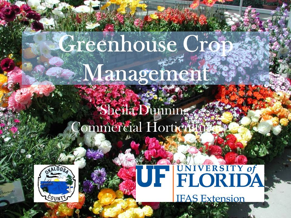 Greenhouse Crop Management Sheila Dunning Commercial Horticulture