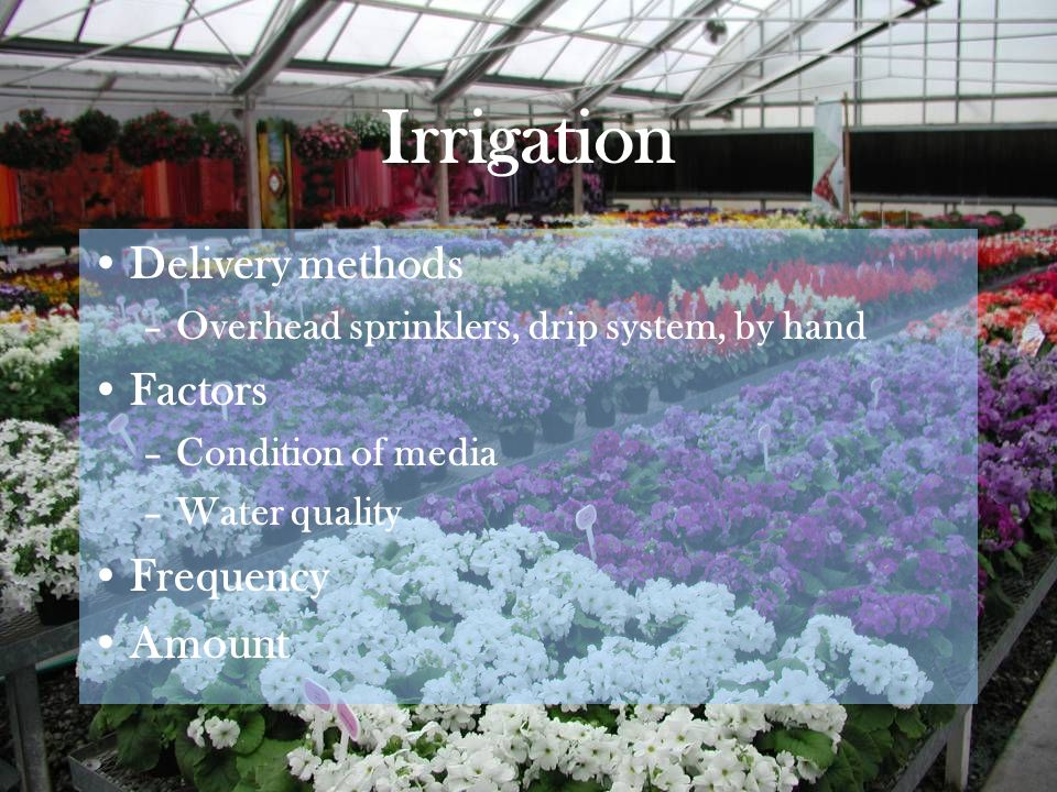 Irrigation Delivery methods –Overhead sprinklers, drip system, by hand Factors –Condition of media –Water quality Frequency Amount