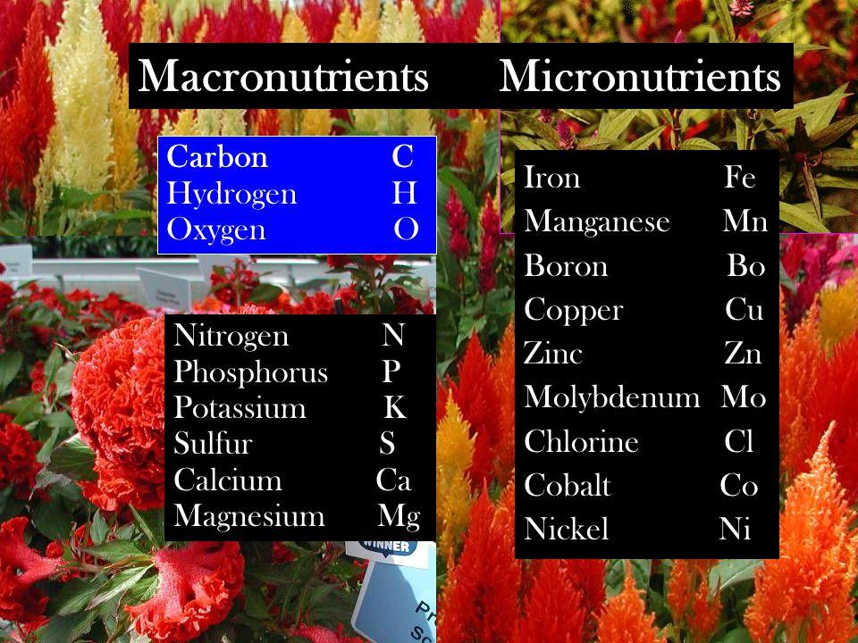 Macronutrients Micronutrients Carbon C Hydrogen H Oxygen O Nitrogen N Phosphorus P Potassium K Sulfur S Calcium Ca Magnesium Mg Iron Fe Manganese Mn Boron Bo Copper Cu Zinc Zn Molybdenum Mo Chlorine Cl Cobalt Co Nickel Ni
