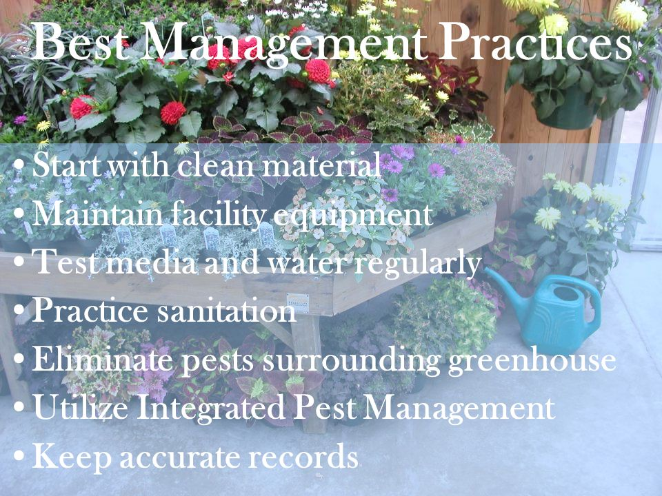 Best Management Practices Start with clean material Maintain facility equipment Test media and water regularly Practice sanitation Eliminate pests sur
