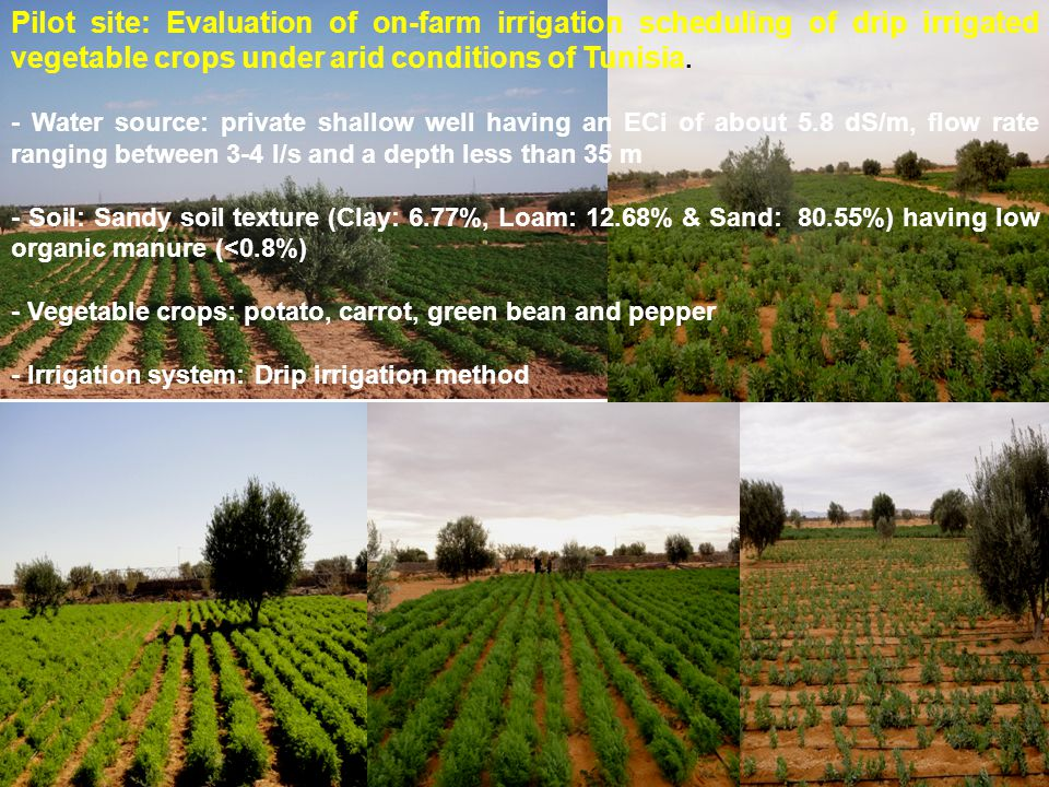 Pilot site: Evaluation of on-farm irrigation scheduling of drip irrigated vegetable crops under arid conditions of Tunisia.