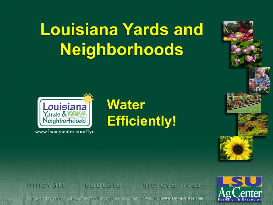 Louisiana Yards and Neighborhoods Water Efficiently! www.lsuagcenter.com/lyn