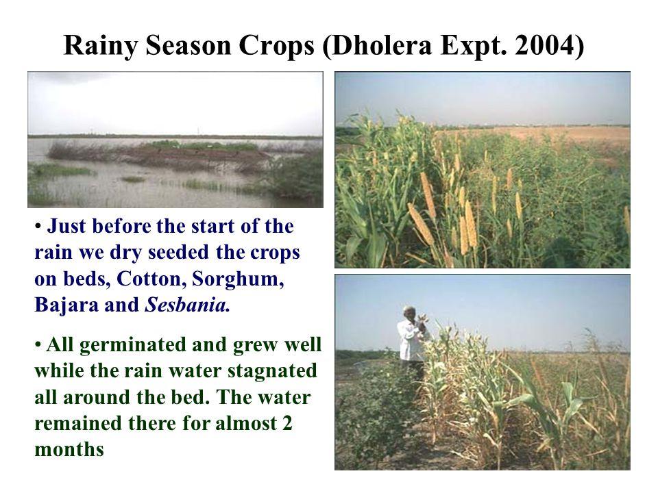 Rainy Season Crops (Dholera Expt.
