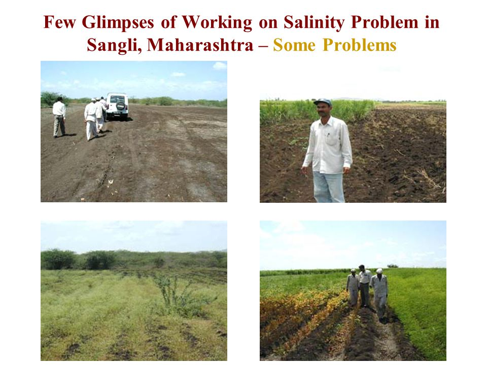 Few Glimpses of Working on Salinity Problem in Sangli, Maharashtra – Some Problems