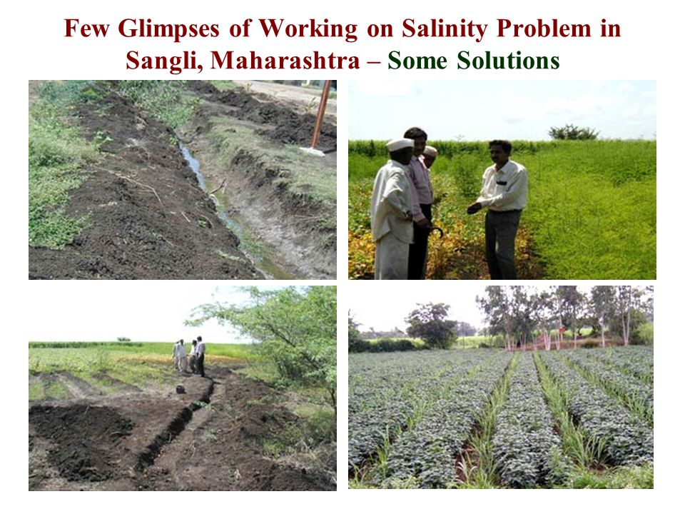 Few Glimpses of Working on Salinity Problem in Sangli, Maharashtra – Some Solutions