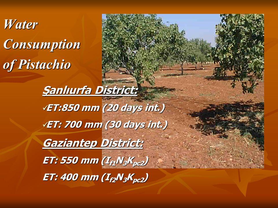 WaterConsumption of Pistachio Şanlıurfa District: ET:850 mm (20 days int.) ET:850 mm (20 days int.) ET: 700 mm (30 days int.) ET: 700 mm (30 days int.) Gaziantep District: ET: 550 mm (I f1 N 3 K pc2 ) ET: 400 mm (I f2 N 3 K pc2 )