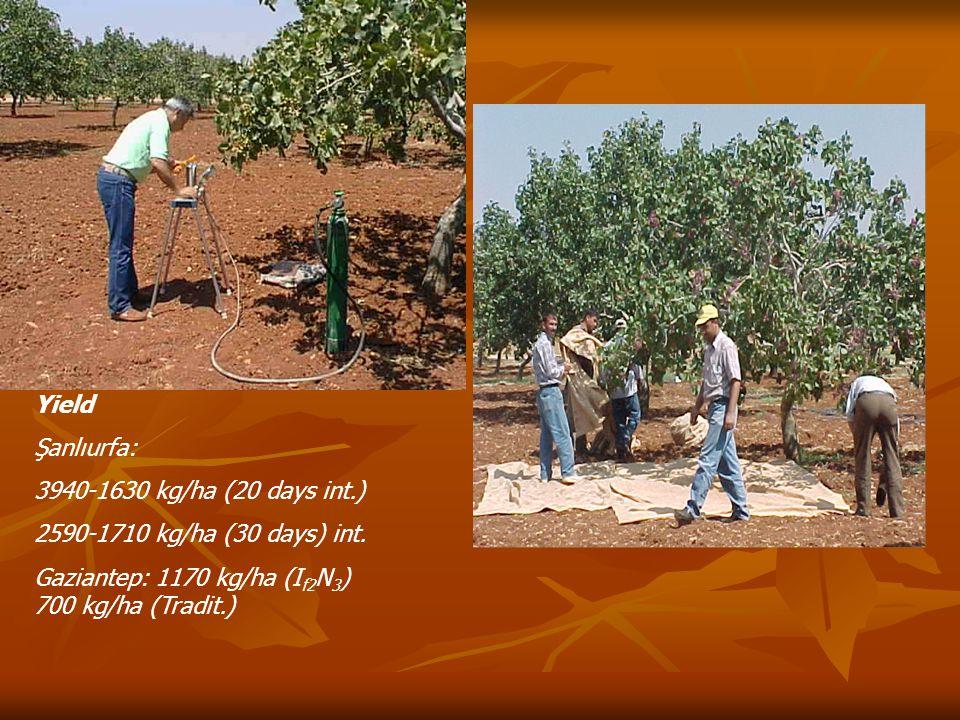 Yield Şanlıurfa: 3940-1630 kg/ha (20 days int.) 2590-1710 kg/ha (30 days) int.