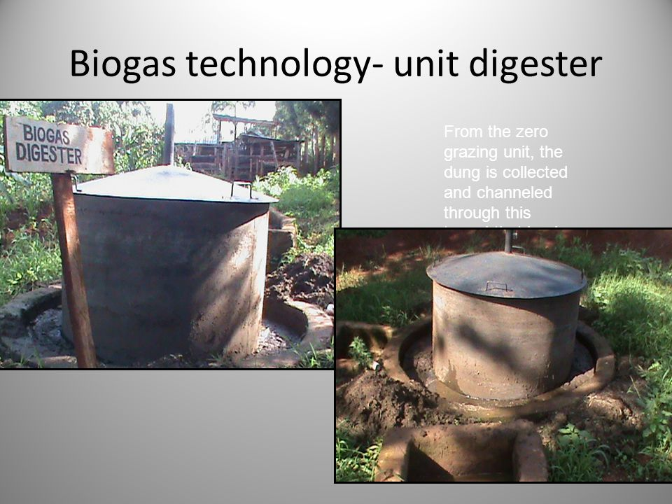 Biogas technology- unit digester From the zero grazing unit, the dung is collected and channeled through this tunnel that leads to the digestion chamb
