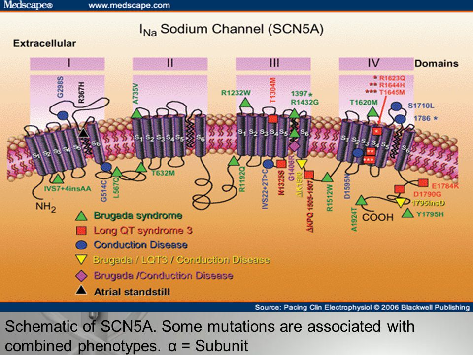 Etiology  Autosomal Dominant  Mutations in gene SCN5A that encodes for the sodium channels in the heart.