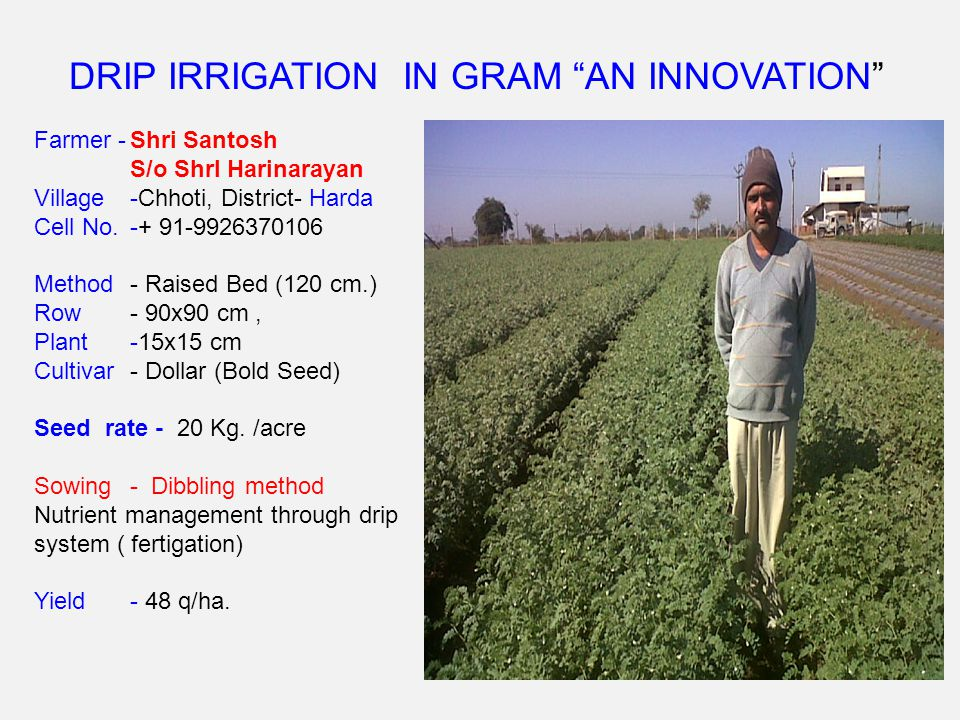 DRIP IRRIGATION IN GRAM AN INNOVATION Farmer -Shri Santosh S/o ShrI Harinarayan Village-Chhoti, District- Harda Cell No.-+ 91-9926370106 Method - Raised Bed (120 cm.) Row- 90x90 cm, Plant-15x15 cm Cultivar- Dollar (Bold Seed) Seed rate - 20 Kg.