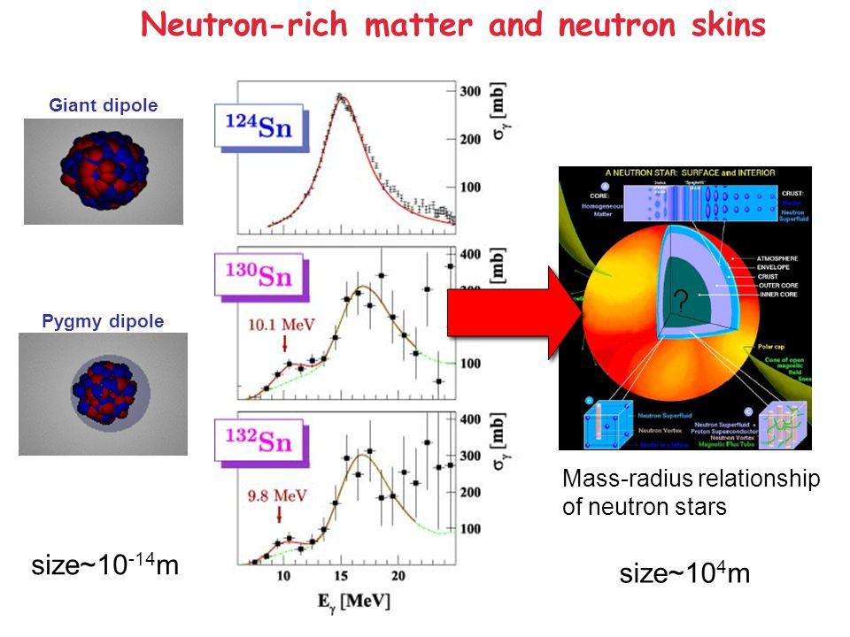 Neutron-rich matter and neutron skins Giant dipole Pygmy dipole size~10 -14 m Mass-radius relationship of neutron stars size~10 4 m