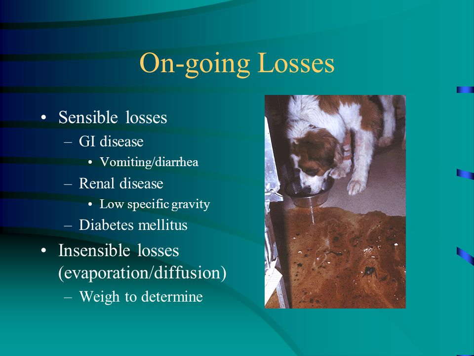 On-going Losses Sensible losses –GI disease Vomiting/diarrhea –Renal disease Low specific gravity –Diabetes mellitus Insensible losses (evaporation/diffusion) –Weigh to determine