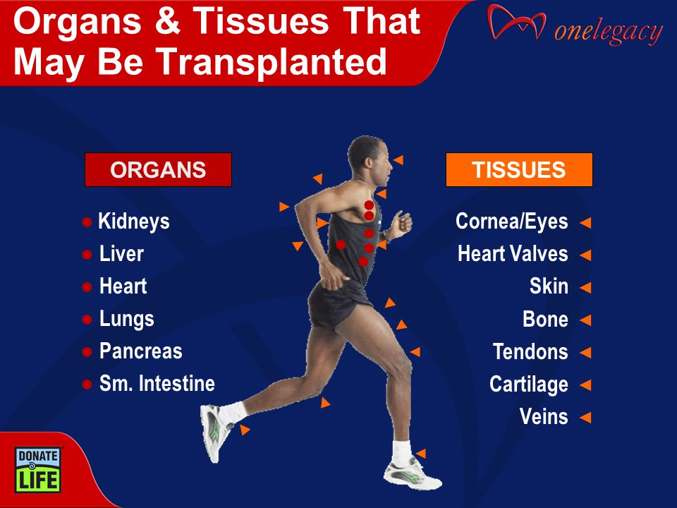 Organs & Tissues That May Be Transplanted Cornea/Eyes Heart Valves Skin Bone Tendons Cartilage Veins TISSUES ◄ ◄ ◄ ◄ ◄ ◄ ◄ ◄ ◄ ◄ ◄◄◄◄◄◄◄◄◄◄◄◄◄◄ ◄ ◄ ◄ ● ● ● ● Kidneys ● Liver ● Heart ● Lungs ● Pancreas ● Sm.