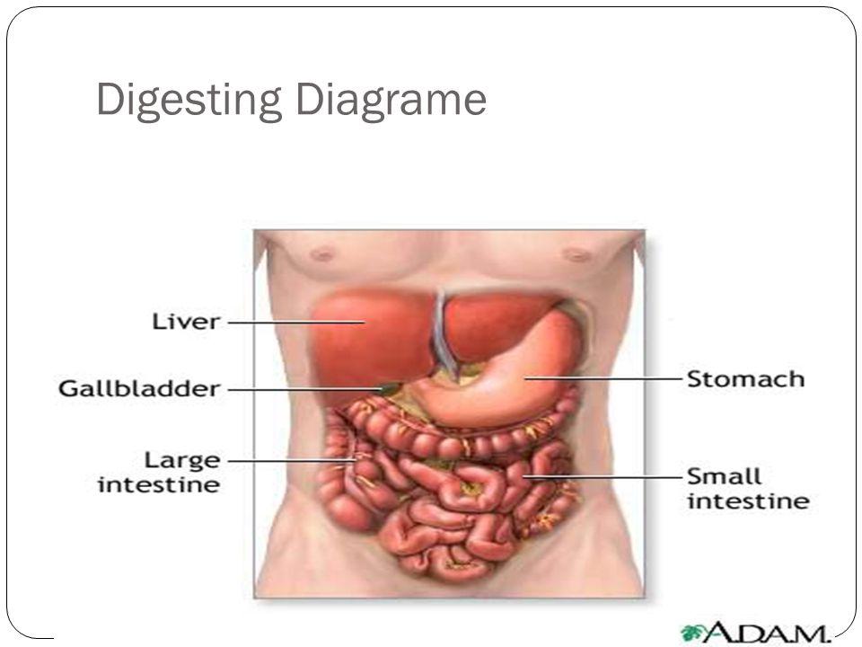 Digesting Diagrame