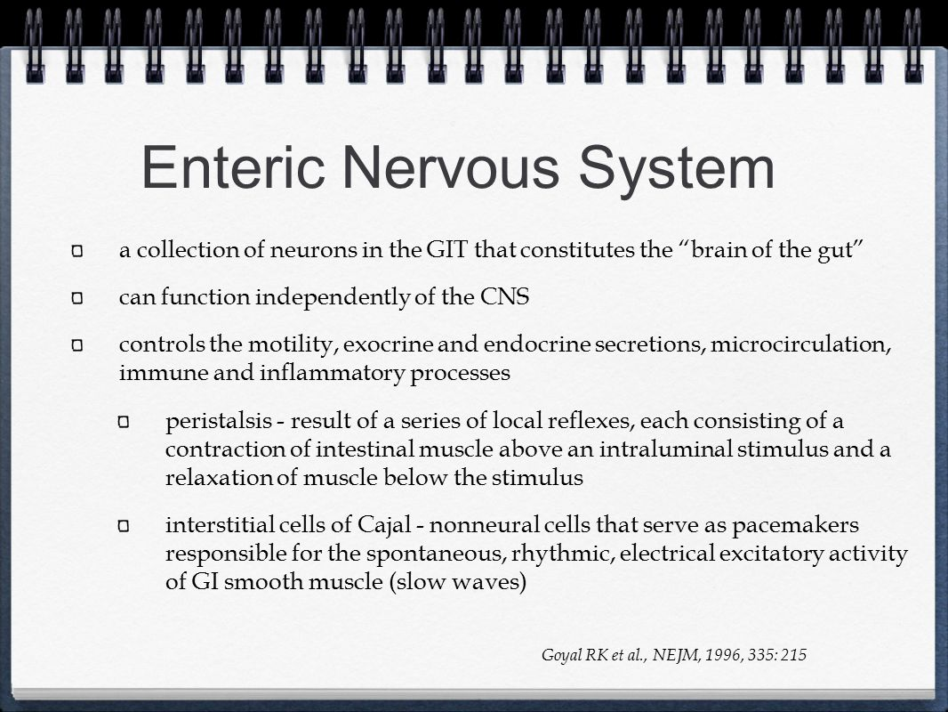 """Enteric Nervous System a collection of neurons in the GIT that constitutes the """"brain of the gut"""" can function independently of the CNS controls the m"""