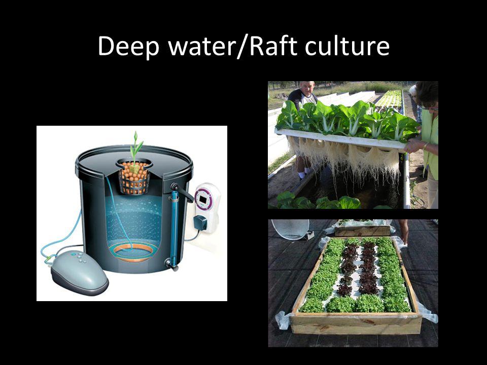 Deep water/Raft culture