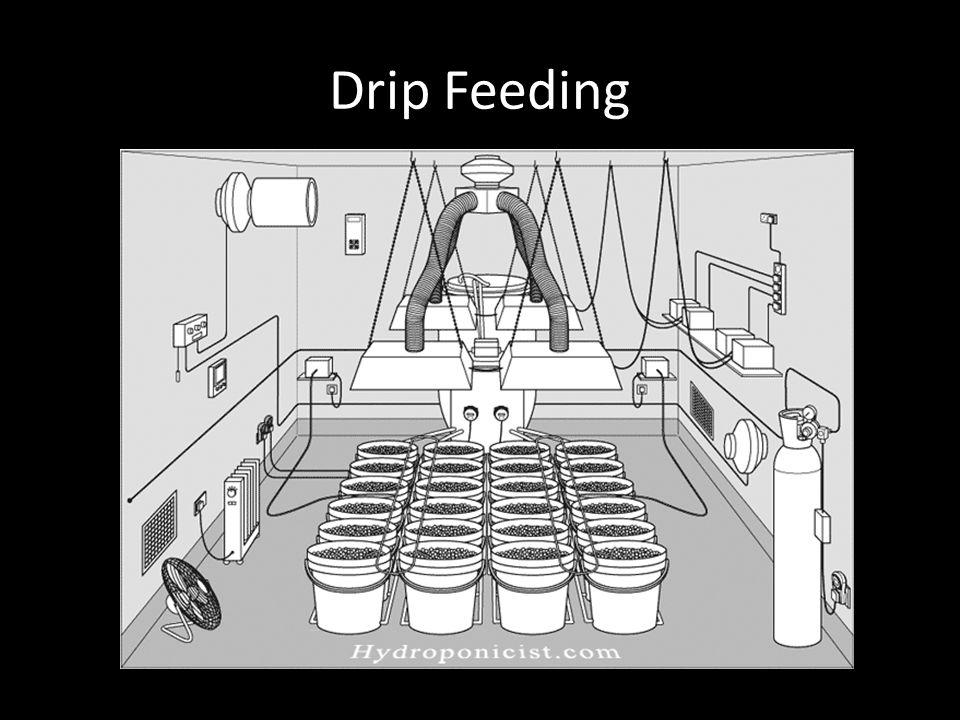 Drip Feeding
