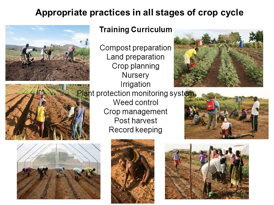 Appropriate practices in all stages of crop cycle Training Curriculum Compost preparation Land preparation Crop planning Nursery Irrigation Plant prot