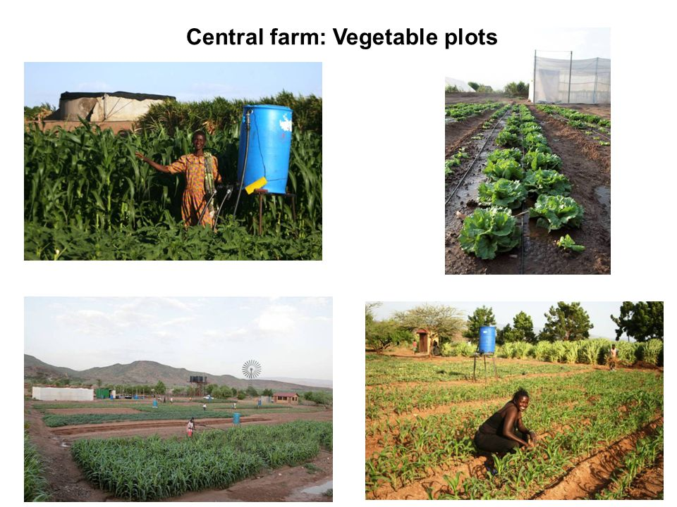 First Yields Central farm: Vegetable plots