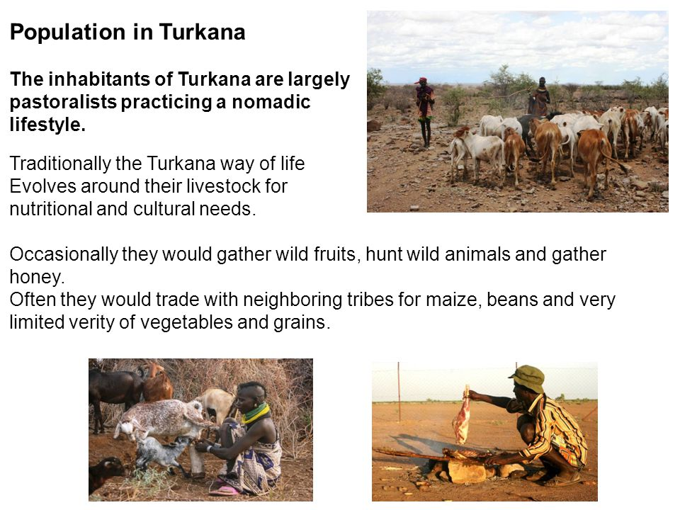 Population in Turkana The inhabitants of Turkana are largely pastoralists practicing a nomadic lifestyle. Traditionally the Turkana way of life Evolve