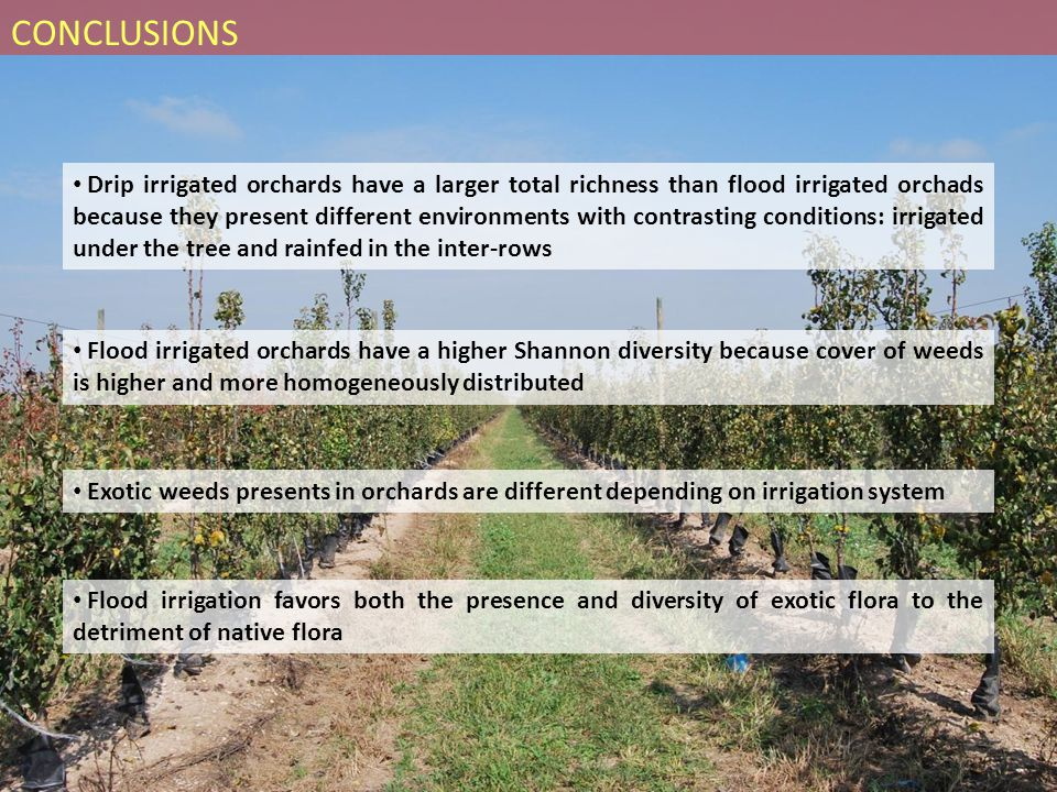 Drip irrigated orchards have a larger total richness than flood irrigated orchads because they present different environments with contrasting conditions: irrigated under the tree and rainfed in the inter-rows Flood irrigated orchards have a higher Shannon diversity because cover of weeds is higher and more homogeneously distributed Flood irrigation favors both the presence and diversity of exotic flora to the detriment of native flora Exotic weeds presents in orchards are different depending on irrigation system CONCLUSIONS