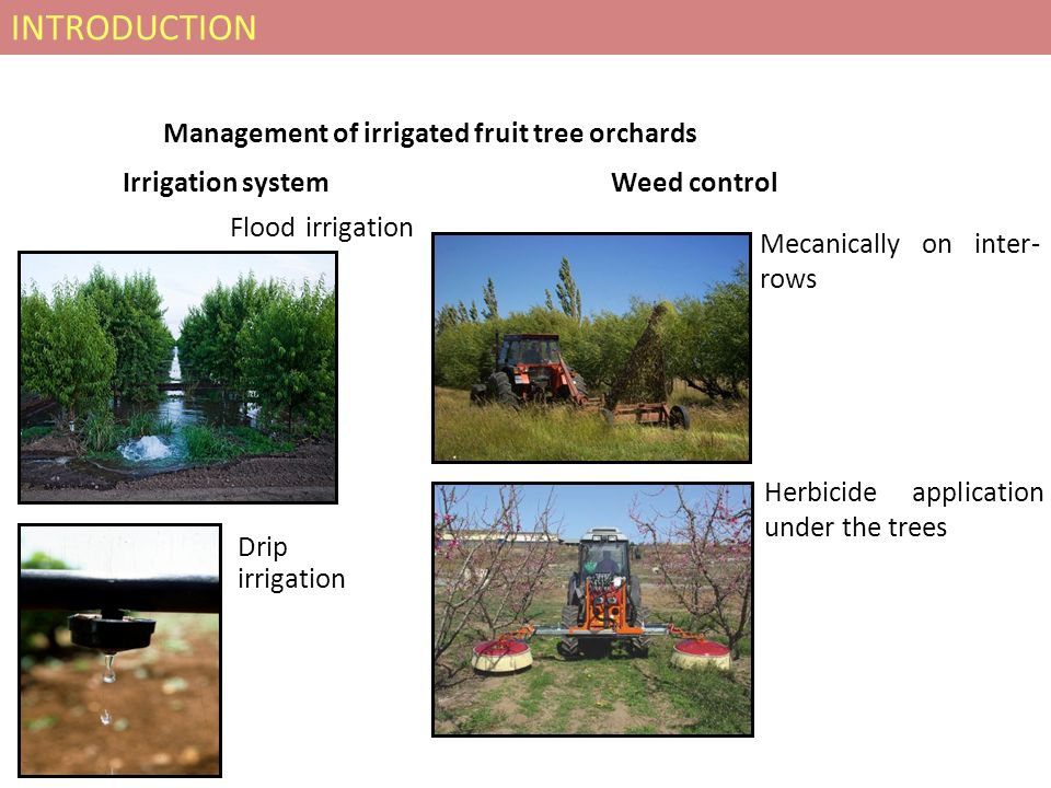 Management of irrigated fruit tree orchards Irrigation system Flood irrigation Weed control Mecanically on inter- rows Herbicide application under the trees INTRODUCTION Drip irrigation