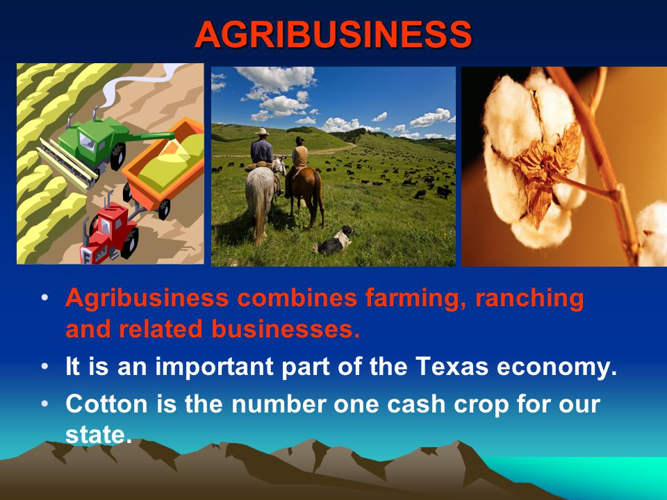 AGRIBUSINESS Agribusiness combines farming, ranching and related businesses. It is an important part of the Texas economy. Cotton is the number one ca