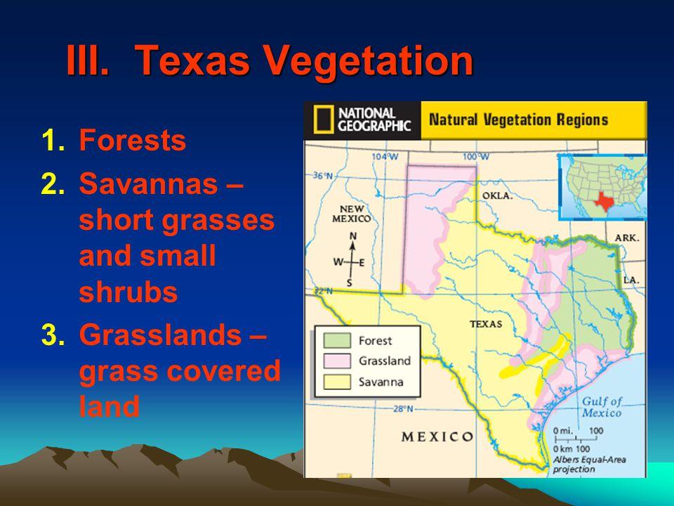 III. Texas Vegetation 1.Forests 2.Savannas – short grasses and small shrubs 3.Grasslands – grass covered land