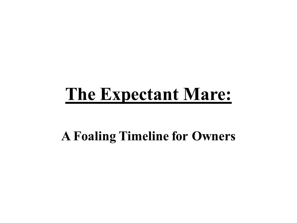 The Expectant Mare: A Foaling Timeline for Owners