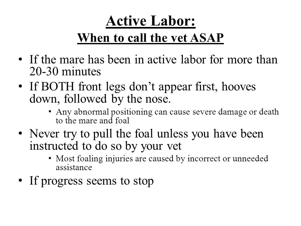Active Labor: When to call the vet ASAP If the mare has been in active labor for more than 20-30 minutes If BOTH front legs don't appear first, hooves down, followed by the nose.