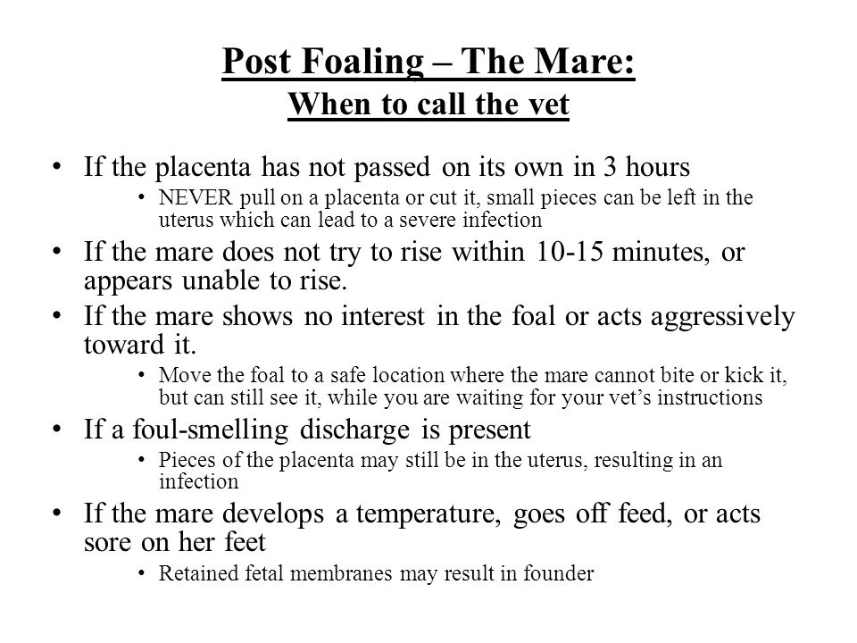Post Foaling – The Mare: When to call the vet If the placenta has not passed on its own in 3 hours NEVER pull on a placenta or cut it, small pieces can be left in the uterus which can lead to a severe infection If the mare does not try to rise within 10-15 minutes, or appears unable to rise.