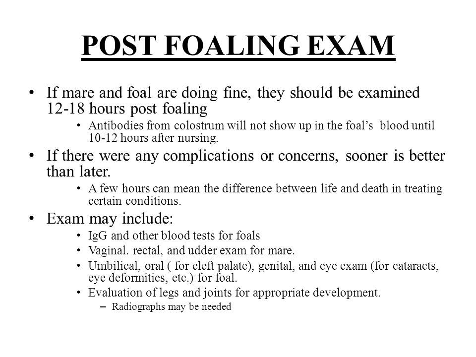 POST FOALING EXAM If mare and foal are doing fine, they should be examined 12-18 hours post foaling Antibodies from colostrum will not show up in the foal's blood until 10-12 hours after nursing.