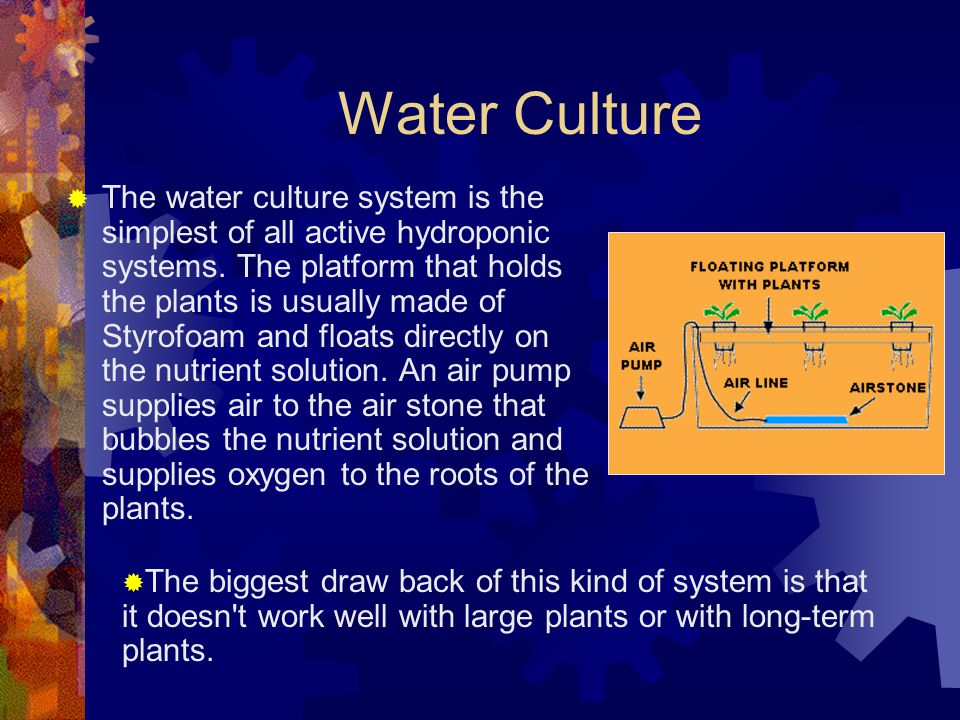 Water Culture  The water culture system is the simplest of all active hydroponic systems.