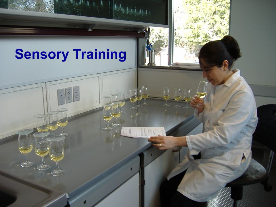 28 Sensory Training