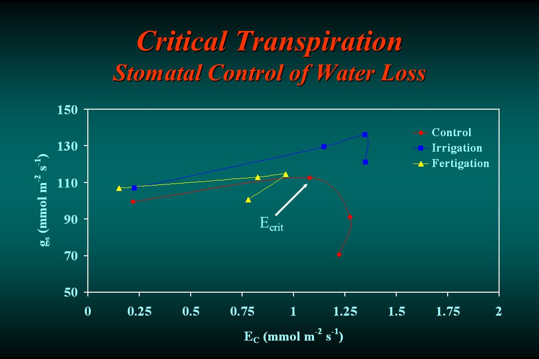 Critical Transpiration Stomatal Control of Water Loss E crit
