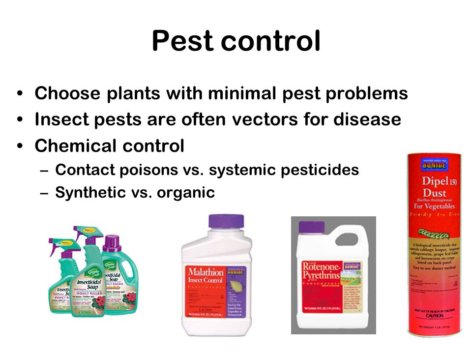 Pest control Choose plants with minimal pest problems Insect pests are often vectors for disease Chemical control –Contact poisons vs. systemic pestic
