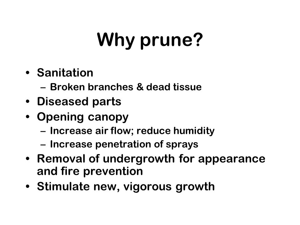Why prune? Sanitation –Broken branches & dead tissue Diseased parts Opening canopy –Increase air flow; reduce humidity –Increase penetration of sprays