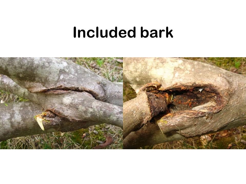 Included bark