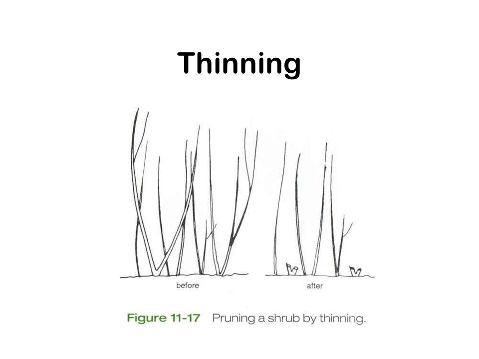 Thinning