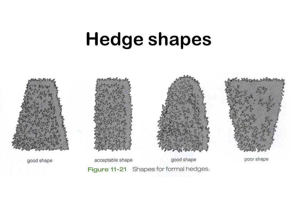 Hedge shapes