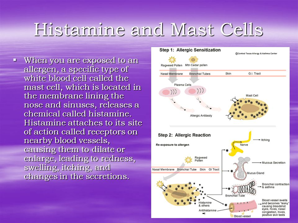 Histamine and Mast Cells  When you are exposed to an allergen, a specific type of white blood cell called the mast cell, which is located in the membrane lining the nose and sinuses, releases a chemical called histamine.
