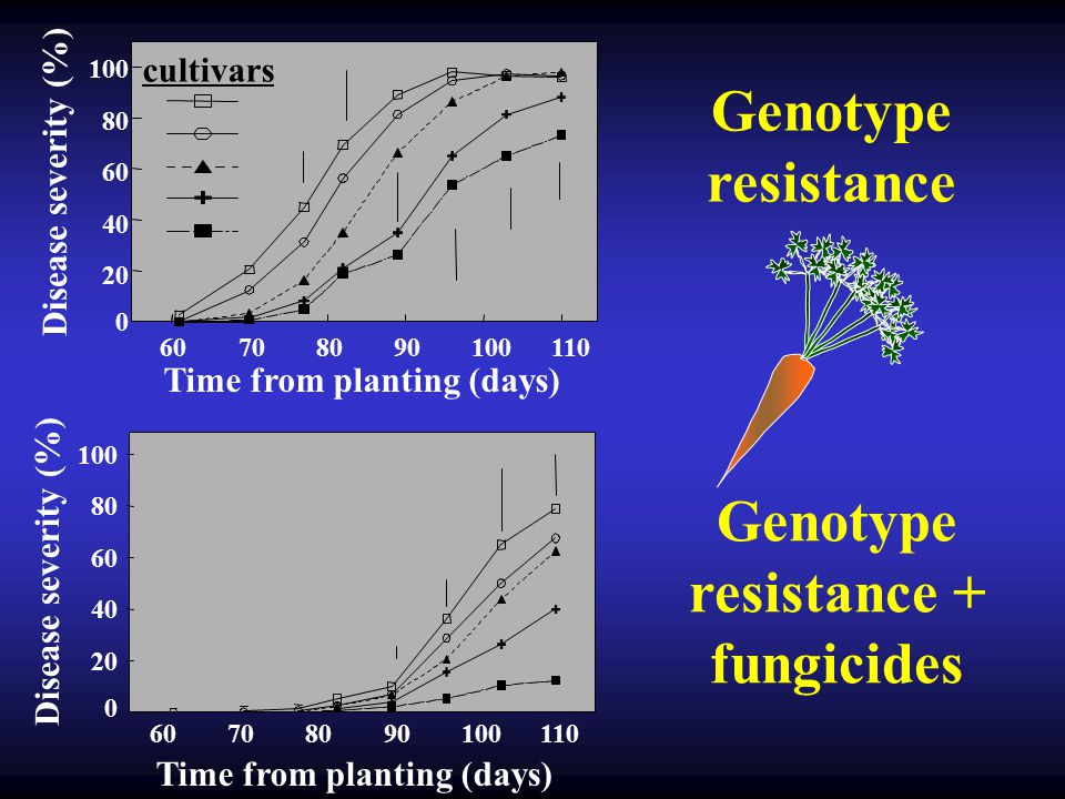 Genotype resistance Disease severity (%) Time from planting (days) 60708090100110 20 40 60 80 100 0 cultivars 20 40 60 80 100 0 60708090100110 Disease