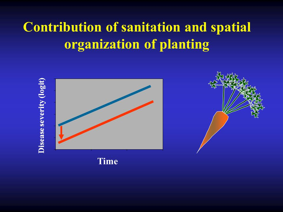 Time Disease severity (logit) Contribution of sanitation and spatial organization of planting