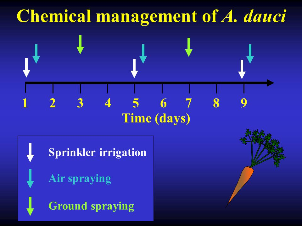 Why the systemic mobility of the fungicide is not an advantage.