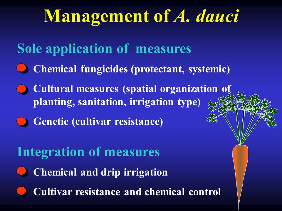 Genotype resistance Disease severity (%) Time from planting (days) 60708090100110 20 40 60 80 100 0 cultivars 20 40 60 80 100 0 60708090100110 Disease severity (%) Time from planting (days) Genotype resistance + fungicides