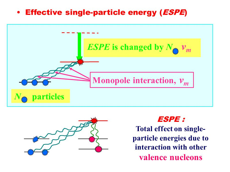 Effective single-particle energy (ESPE) ESPE : Total effect on single- particle energies due to interaction with other valence nucleons Monopole interaction, v m ESPE is changed by N v m N particles