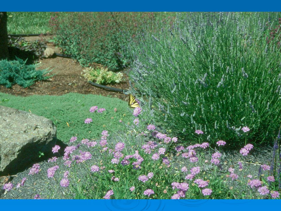 Site considerations soil sun/shade wind bed/border existing features viewpoint