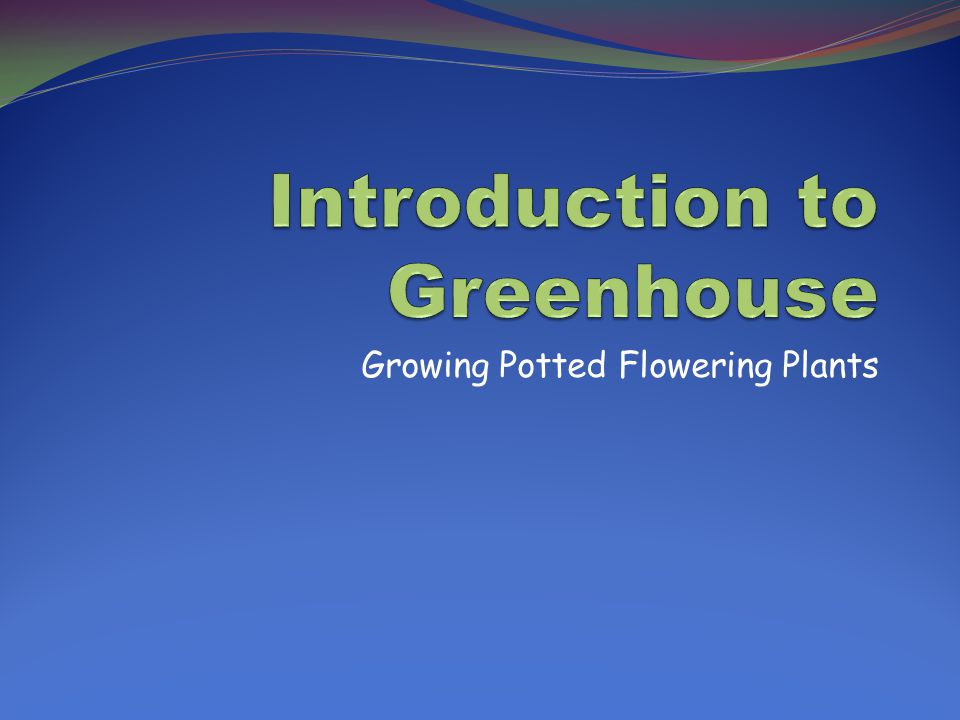 Growing Potted Flowering Plants