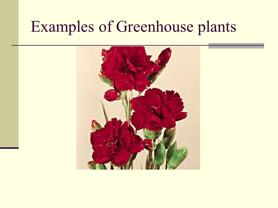 Examples of Greenhouse plants